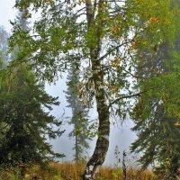 Утром в лесу :: Сергей Чиняев