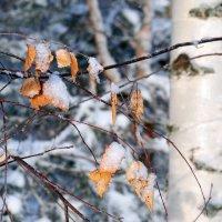Немного осени морозной зимой :: Николай Белавин