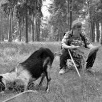 Алёнушка, на коленях прошу, идём домой! :: Елена Миронова