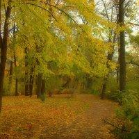 Тропинка в золотую  Осень ... :: Наталья