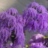 Толи болонка, толи цветок :: Андрей Кротов