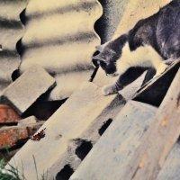 кот и бабочка :: Бармалей ин юэй