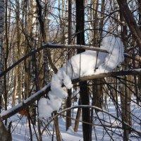 Снежный зверёк :: Ольга