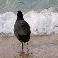 Снова лезть в эту холодную воду... :: Валерий Дворников