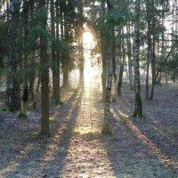 морозное утро в лесу :: Анатолий Кошевенко