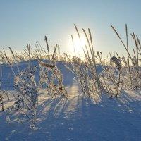 Зимний пейзаж на окраине Северодвинска.) :: Михаил Поскотинов