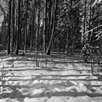 Тени на снегу. :: Любовь Чунарёва