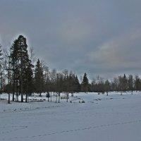 Январское безмолвие.... :: Tatiana Markova