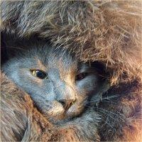 маленький эскимос встречает солнце )) :: Марина Буренкова