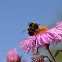 Лето, солнце, дача... пчёлы... счастье... :: Лето Теплое