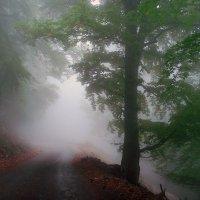 В тумане :: Ольга