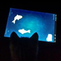 Ловись рыбка... :: сергей адольфович