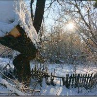 Дерево упало. :: Юрий Ефимов