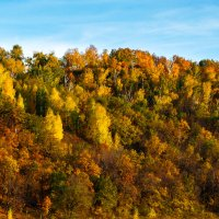 Осенний лес :: Рашит Усманов