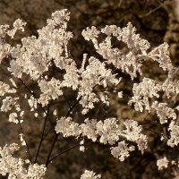 цветы зимы :: Александр Прокудин