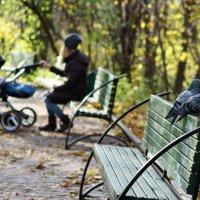 В осеннем парке :: Оксана Лада