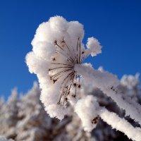 Зима снежком укутала... :: Андрей Заломленков
