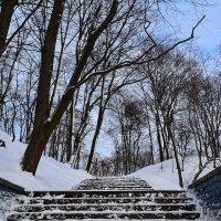 Зимний парк. :: Paparazzi