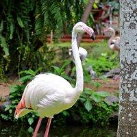 Фламинго :: Асылбек Айманов