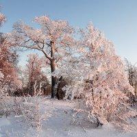 Малиновый закат :: Николай Танаев