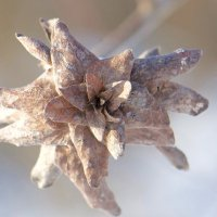 Зимние цветы :: Руслан