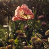 Дождь :: Татьяна Панчешная
