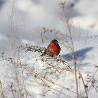В морозный день :: Ната Волга