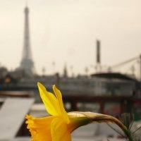 Любимый, жёлтый цветок :: Galina Belugina