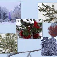 Зимние мотивы... :: Тамара (st.tamara)