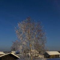 Зимним днем.2017 :: Артём Бояринцев