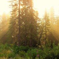Туман и солнце :: Сергей Чиняев