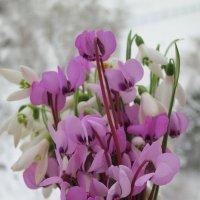 Вчера цветочки -сегодня снежок ! :: valeriy khlopunov