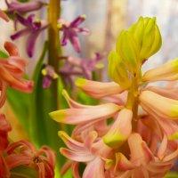Домашние цветы :: Руслан