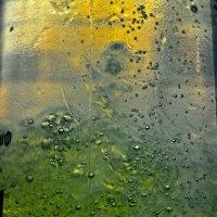 бульбашка айра :: Роза Бара