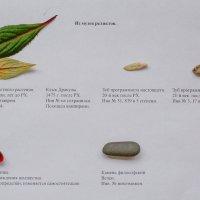 Экспонаты :: Валерий Murr