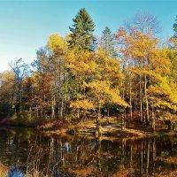 Чарующий мир Золотой осени... :: Sergey Gordoff