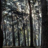 Лучезарный лес :: Сандродед
