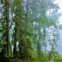 Окутанный туманом лес :: Сергей Чиняев