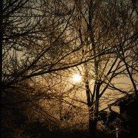 Морозным утром. :: Юрий Фёдоров
