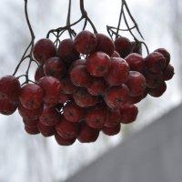 ягода :: Алена Засовина