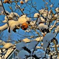 Яблоки в снегу :: Натали Пам