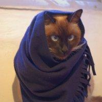 Зимняя мода :: Ефим Журбин