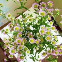 Незатейливые цветы :: татьяна