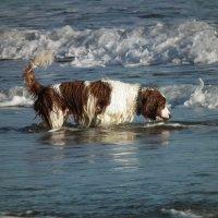 Собака и море :: Natalia Harries