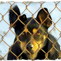 Посмотрите в глаза собаке! В них кричит иногда душа! :: Валентина ツ ღ✿ღ