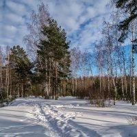 Январский день 2 :: Андрей Дворников