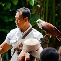 """В """"Парке птиц"""" на острове Бали :: Асылбек Айманов"""