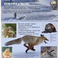 Сегодня открытие фотоэковыставки в Новосибирске. :: Наталья Золотых-Сибирская