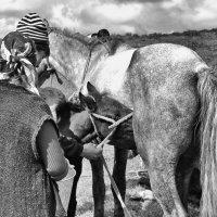 Кумыс :: santamoroz