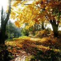 Осень золотая! :: Натали Пам